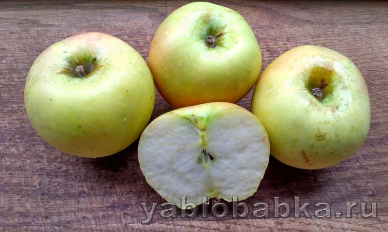 Шарлотка с тертыми яблоками и сметаной: фото 2